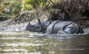 74 Ekor Badak Jawa yang Tersisa Rayakan Hari Badak Sedunia