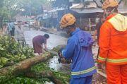 Diterjang Hujan Disertai Angin Kencang, 3 Pohon Besar di Cimahi Tumbang