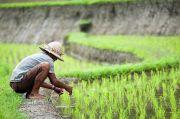 Genjot Ekonomi Desa, OJK Bakal Permak Kapasitas Bisnis BUMDes