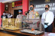 Jual Satwa Dilindungi, Warga Bantul dan Bandung Dibekuk Polisi