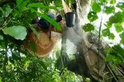 Masa Pandemi COVID-19, Pesanan Madu Hutan di Aceh Meningkat