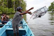 Menakar Potensi Ekonomi dari Hutan Mangrove Bintuni