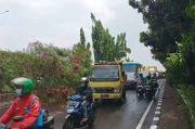 Diterpa Hujan dan Angin Kencang, Pohon Petai Cina di Matraman Tumbang