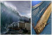 Oarfish, Tsunami dalam Takhayul Modern Masyarakat Jepang