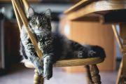 Waspadai 5 Bahaya Bulu Kucing buat Kesehatanmu!