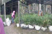 UPPKS Green Family Manfaatkan Produk Olahan Jahe dari Lahan Gambut