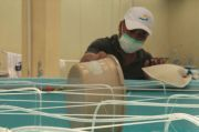 Riset Udang Windu Tetap Berlangsung di Tengah Pandemi COVID-19