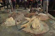 Pandemi COVID-19 Membuat Nelayan Cantrang Rembang Menjerit