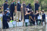 Ratusan Ribuan Batang Pohon Mangrove dari Kementerian LHK Ditanam di Maros