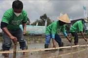 Tingkatkan Ketahanan Pangan Lokal, Pertanian Organik Dikembangkan di Kalasan