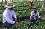 Buka 40 Hektar Lahan Pembibitan Sawit, PTPN V Gandeng Emak-emak