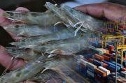 Hasil Uji Residu 5 Tahun Terakhir, Produk Ikan RI Aman Dikonsumsi