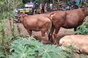 Komplotan Pencuri Sembunyikan 6 Ekor Sapi di Lereng Argopuro