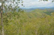 Pohon Kayu Putih Situs Tutari, Diserbu Warga di Masa Pandemi