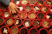 Ini Komposisi Suplemen Herbal Buatan Pemerintah untuk Tangkal Covid-19