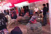 Meresahkan Warga, Bandar Sabung Ayam Dibekuk Polisi