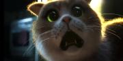 Yuk, Nonton Scaredy Cat, Film Horor Pertama untuk Kucing!