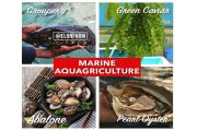 Marine Aquagriculture: Pertanian Modern Berbasis Air Laut