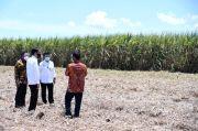 Resmikan Pabrik Gula di Bombana, Jokowi: Butuh Keberanian Buka Usaha di Tempat Ini