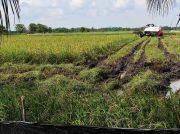 Pastikan Ketahanan Pangan Terjaga, Penyuluh Diminta Dampingi Petani