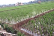 Dapat Alokasi 225 Hektare Lahan PATB, Petani Diminta Genjot Produksi Padi