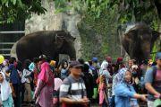 Taman Margasatwa Ragunan Tak Ada Persiapan Khusus pada Liburan Cuti Bersama