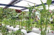 Urban Farming di Jakpus Demi Perkuat Ketahanan Pangan