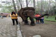 Aek Nauli Elephant Conservation Camp (ANECC), Rumah Gajah Sumatera yang Jadi Destinasi Alternatif
