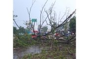 Pohon Tumbang Timpa Mobil dan Motor, Satu Warga Terluka di Tambun