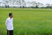 Food Estate Humabahas Berbasis Hortikultura