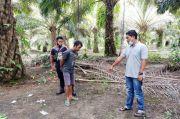 Setubuhi Pacar Masih ABG di Kebun Kelapa Sawit, Pria Ini Dicokok Polsek Lubuk Besar