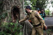 Ini Instruksi Bima Arya Soal Pohon Tumbang di Bogor