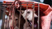 Catat, Perdagangan Daging Anjing termasuk Kategori Ilegal!
