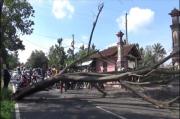 Beringin Besar di Boyolali Tiba-tiba Tumbang, Timpa Satu Pesepeda