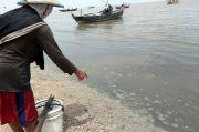 Rembang Mendadak Gempar, Ratusan Ribu Ubur-ubur Mati Mendadak