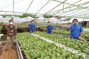 XL Smart Hydroponics, Cara XL Axiata Mendongkrak Panen Urban Farming