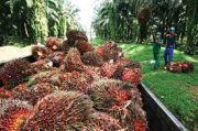 Produksi Sawit Konsisten Naik Seiring Membaiknya Permintaan