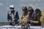 Gubernur Panen Udang Sitto Ramah Lingkungan Kualitas Premium Ekspor