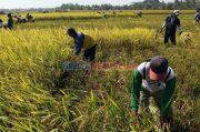Kadin Targetkan Beri Pendampingan Dua Juta Petani di 2023