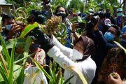 Tahura Lempung, Lokasi Pelestarian Alam dan Ternak di Perkotaan