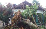 Hujan Angin di Sleman, Beberapa Pohon Tumbang Timpa Lima Rumah Warga