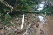 Kebun Sawit Bupati Pidie Jaya Diobrak Abrik Kawanan Gajah Liar