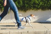 Bawa Anjing Berjalan-jalan Tingkatkan Risiko Tertular Covid-19