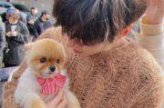 Makin Menggemaskan, Lee Min-ho Gendong Anjing Kecil