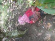 Tewas dengan Usus Terburai Petani Ini Diserang Babi Hutan di Pidie Jaya