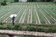 Desa di Kediri Memperbaiki Taraf Hidup Saat Pandemi lewat Pertanian Bawang Sayur