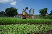 BRG Sosialisasi Penggunaan Bahan Alami untuk Pertanian
