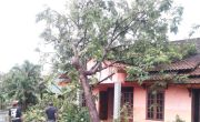 Hujan Disertai Angin di Sleman, Pohon Tumbang Timpa 8 Rumah