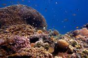 We Love Bali, Menikmati Keindahan Taman Laut dan Budaya di Desa Les