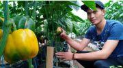 Ajak Milenial Bertani, Kang Emil Kenalkan Petani Muda Berpenghasilan Rp20 Juta/Bulan